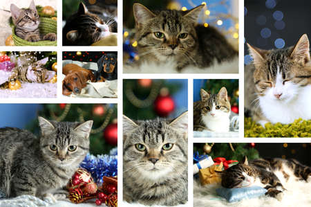 Christmas animals collage photo