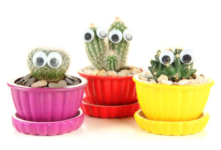 Cactuses in flowerpots with funny eyes, isolated on white  photo