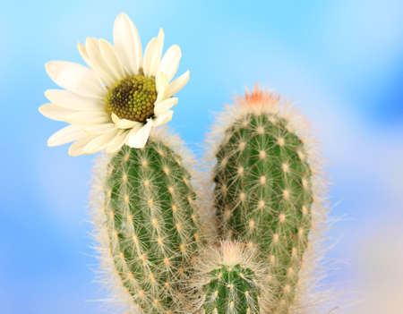 Cactus with flower Stock Photo