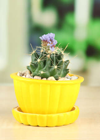 Cactus in flowerpot with flower, on wooden windowsill photo