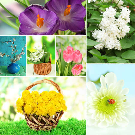 Spring flowers collage photo