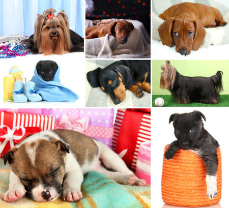 Collage of cute puppies photo
