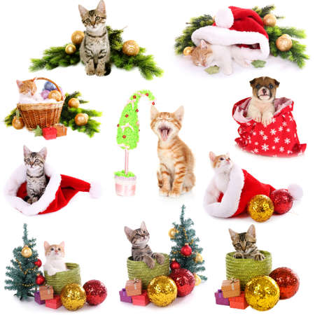 Collage of animals with Christmas decorations isolated on white photo