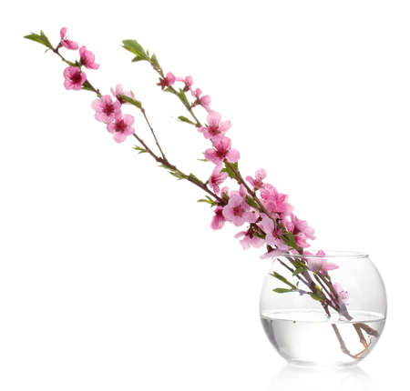 stamens: beautiful pink peach blossom in glass vase isolated on white Stock Photo