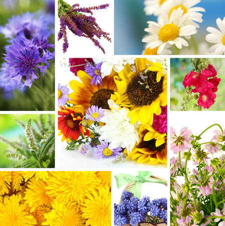 Wildflowers collage photo