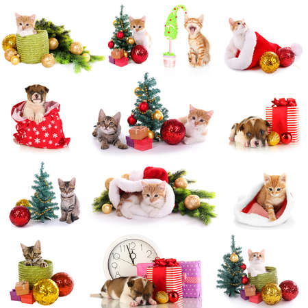 Collage of kittens and puppy with Christmas decorations isolated on white photo