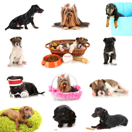 Collage of cute puppies isolated on white photo
