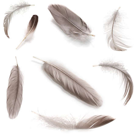 Collage of fluffy feathers isolated on white photo