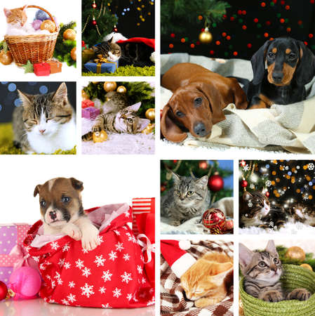 Collage of animals with Christmas decorations photo