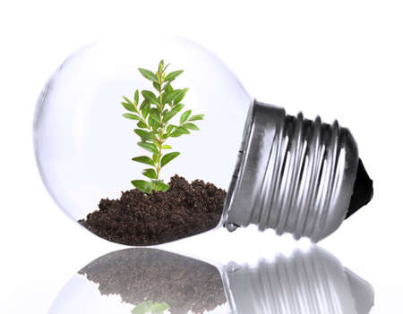 welfare plant: Green eco energy concept. Plant growing inside light bulb, isolated on white
