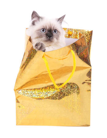 Beautiful cat in package isolated on white photo