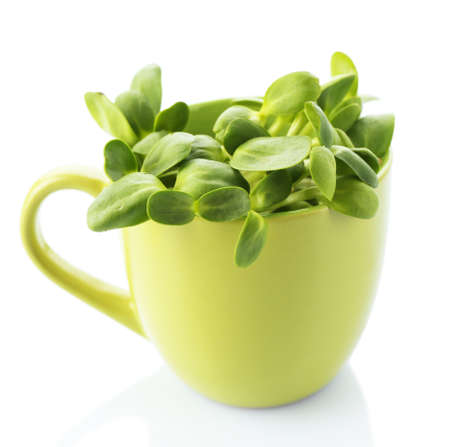 Green young sunflower sprouts in cup isolated on white photo