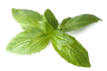 flavorings: Green fresh basil, isolated on white