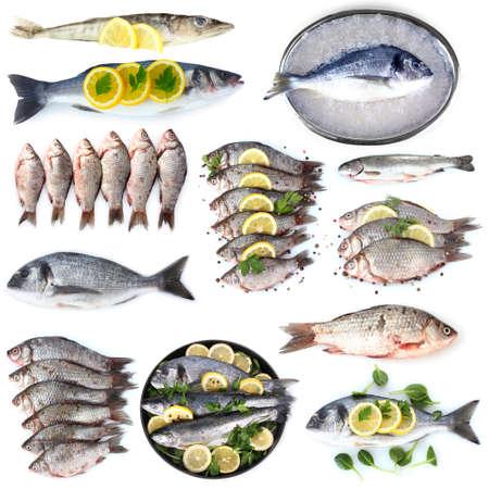 Verse vis en visgerechten op wit wordt geïsoleerd