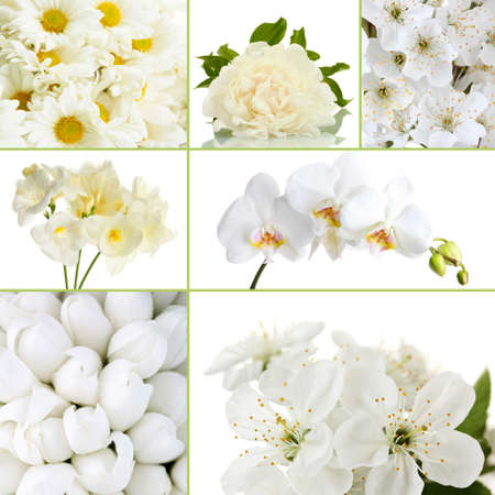 Collage of different white flowers stock photo picture and royalty collage of different white flowers stock photo picture and royalty free image image 26385502 mightylinksfo