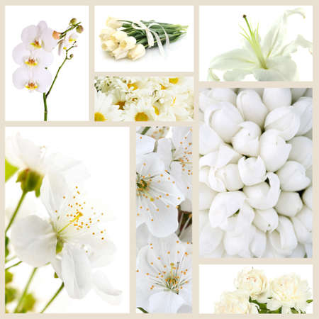 Collage of different white flowers stock photo picture and royalty collage of different white flowers stock photo 26554323 mightylinksfo