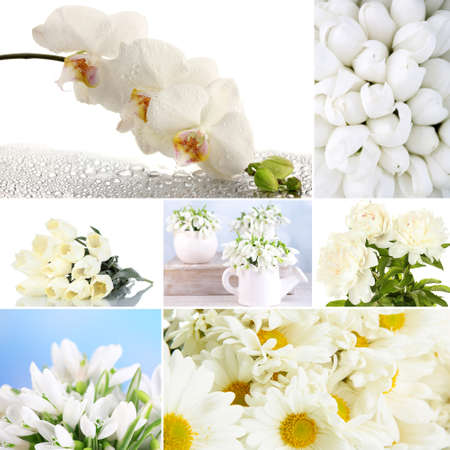Collage of different white flowers stock photo picture and royalty collage of different white flowers stock photo 26553613 mightylinksfo