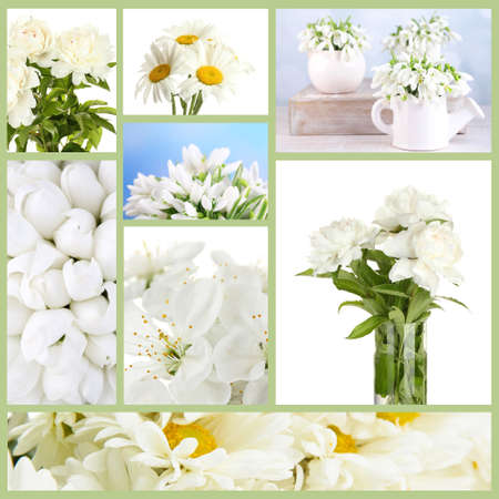 Collage of different white flowers stock photo picture and royalty collage of different white flowers stock photo 26553620 mightylinksfo