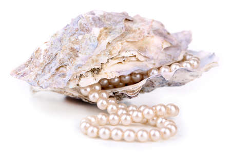 Shell with pearls, isolated on white photo