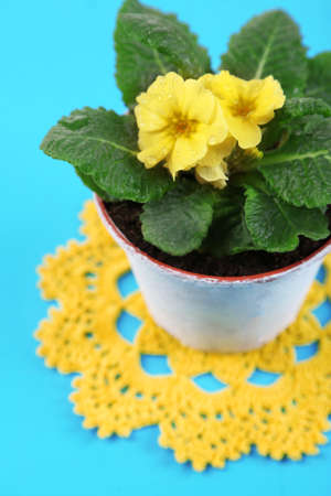 Yellow primrose in pot on color napkin on wooden background photo