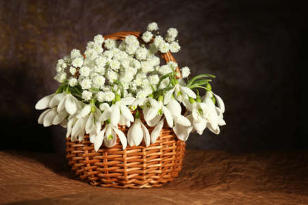 Beautiful snowdrops in basket, on brown background photo