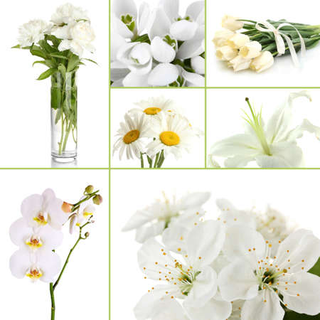 Collage of different white flowers photo