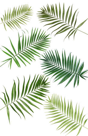 Collage of beautiful palm leaves isolated on white photo