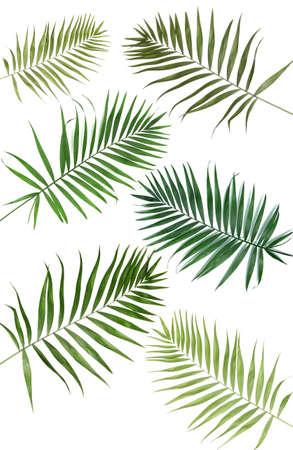 Collage van mooie palm bladeren geïsoleerd op wit