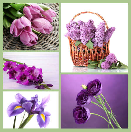 Collage of different  purple flowers photo