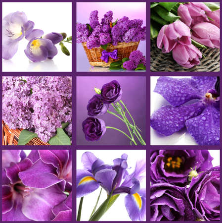 Collage de diferentes flores de color p�rpura photo