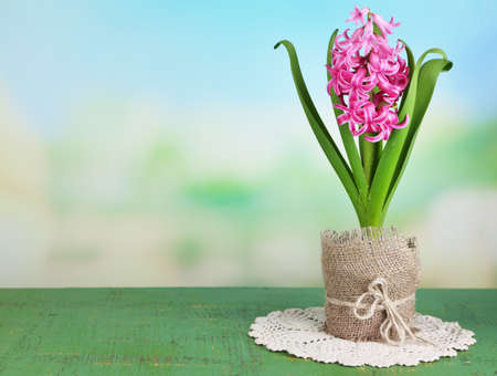 Beautiful pink hyacinth flower in pot, on color wooden table, on bright background photo