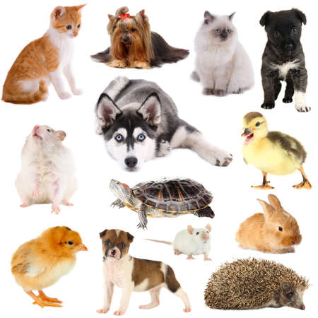 Collage of different pets isolated on white photo
