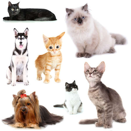 Collage of cats and dogs isolated on white photo