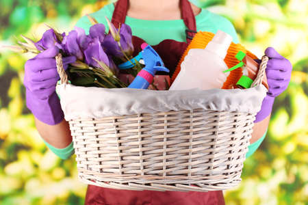 spring cleaning: Housewife holding basket with cleaning equipment on bright background. Conceptual photo of spring cleaning.