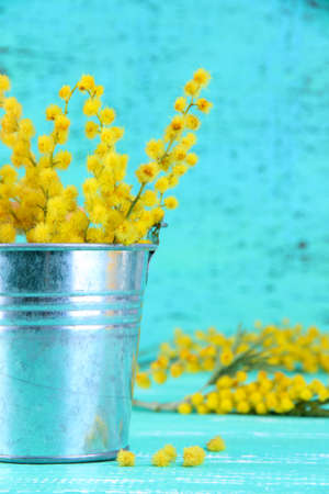 Twigs of mimosa flowers in pail on blue wooden table photo