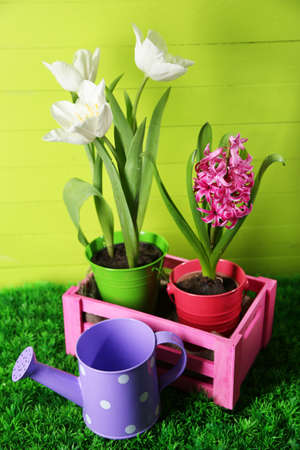 Beautiful tulips and hyacinth flower on  wooden box on color wooden background photo