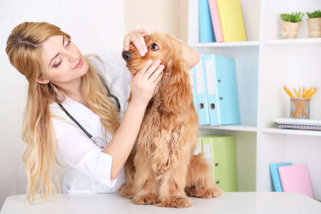 Beautiful young female veterinarian examining dog in clinic photo