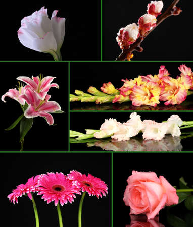 Collage of beautiful flowers on black background photo