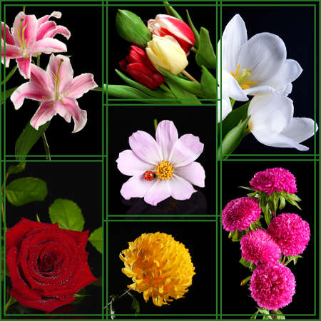 Collage of beautiful flowers on black  photo