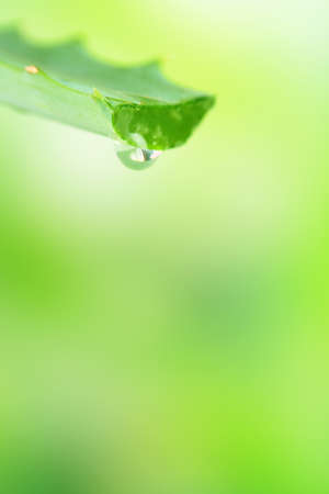 Fresh green aloe leaf with drop of juice, on light background photo