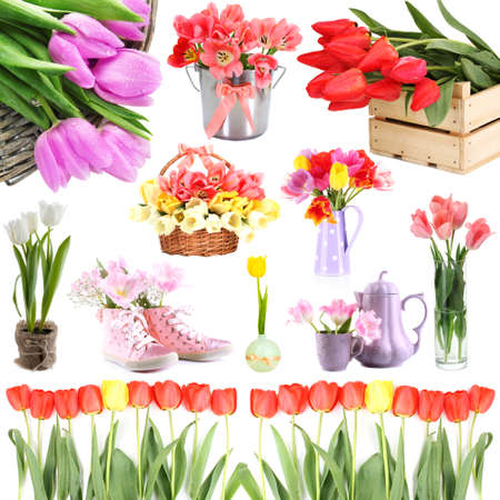 Beautiful tulips isolated on white photo