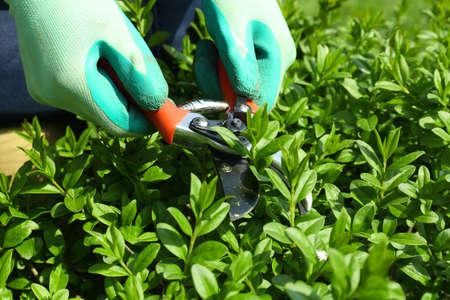 Pruning bushes in garden Stock Photo - 27871786