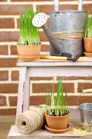 Green grass in flowerpots and oat seeds on brick wall background photo