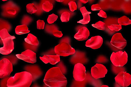 obody: Beautiful red rose petals on dark background