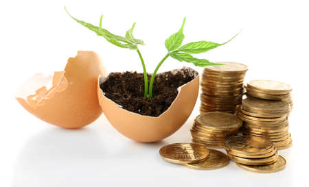 Coins and plant in eggshell isolated on white photo
