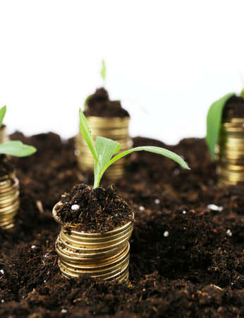 Business concept: golden coins in soil with young plants, isolated on white photo