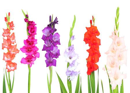 Beautiful gladiolus flower isolated on white photo