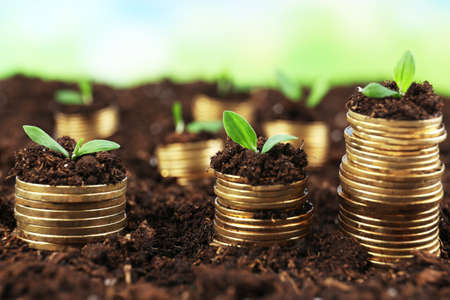 Business concept: golden coins in soil with young plants on nature background Stock Photo