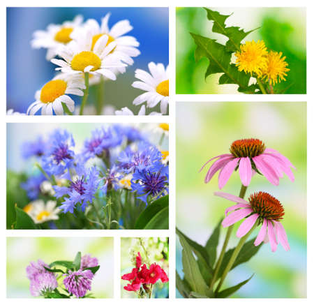 Collage of wildflowers photo