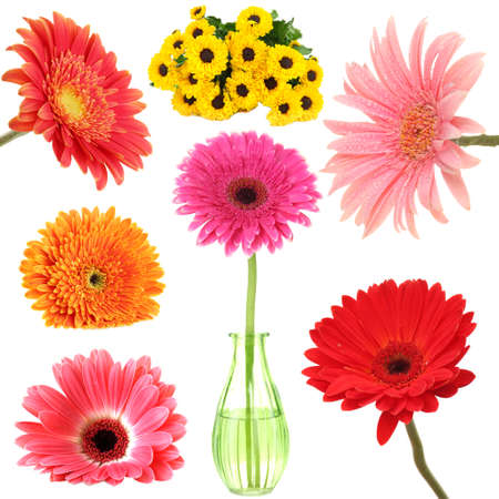 Collage of beautiful gerbera isolated on white photo